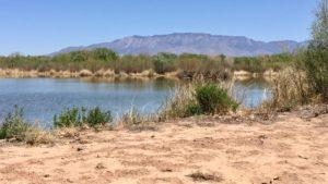Candelaria-Wetland-Rio-Grande-Sutter-Sugar-Albquerque